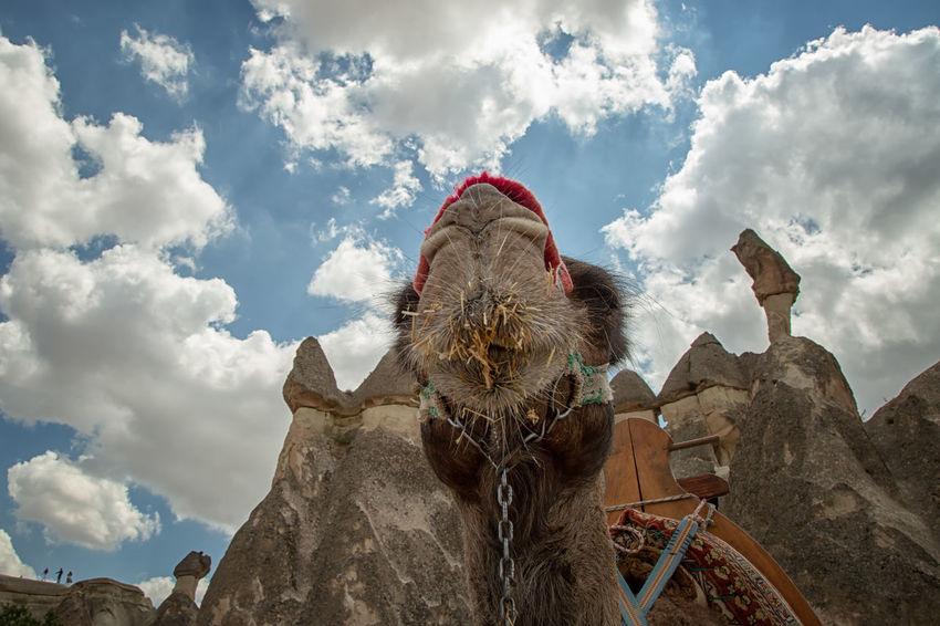 Cappadocia Cappadocia Cappadocia/Turkey Turkey Camel Cloud - Sky Holiday Mammal Nature One Animal Sky