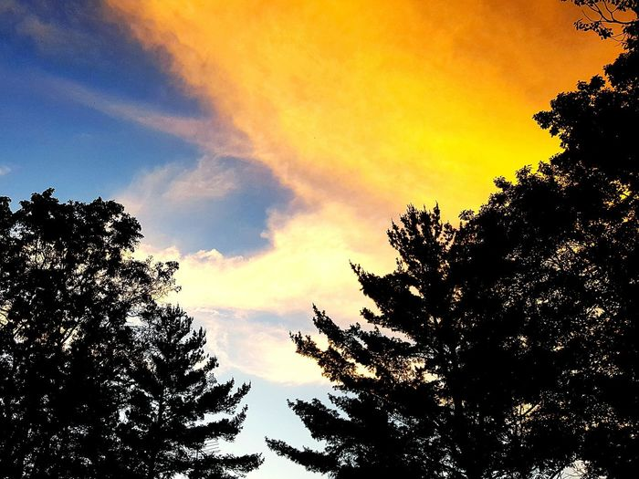 Sunset Tree Nature Beauty In Nature Sky No People Outdoors Tranquil Scene Rural Scene Cloud - Sky Silhouette Tree Orange Color Beauty In Nature