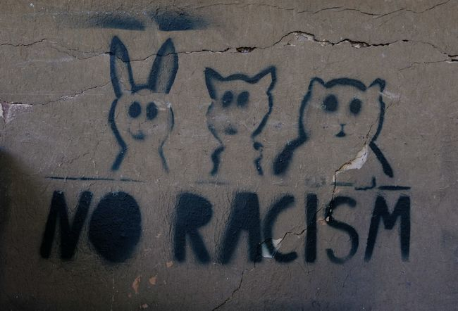 Anarchy Charlottesville Donald Trump Donald Trump's America Political Art Politics Protest Racism Revolution USA Wall Art Communication No RACISM Here .  No Racism Political Street Art Politics And Government Street Sign Text Trump Protest Wall Sign