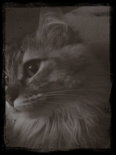 Black & White Love Cat Home