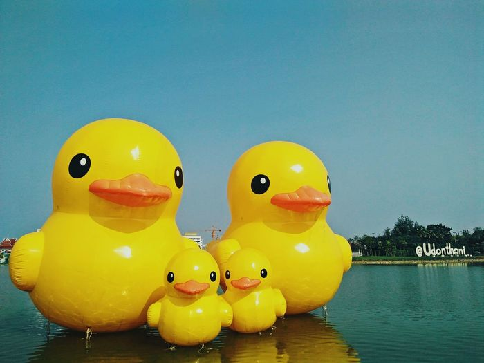 Duck Duck Duckyellow Sky River Duckfamilly Family Cute Water Yellow Floating On Water Close-up Mandarin Duck Rubber Duck