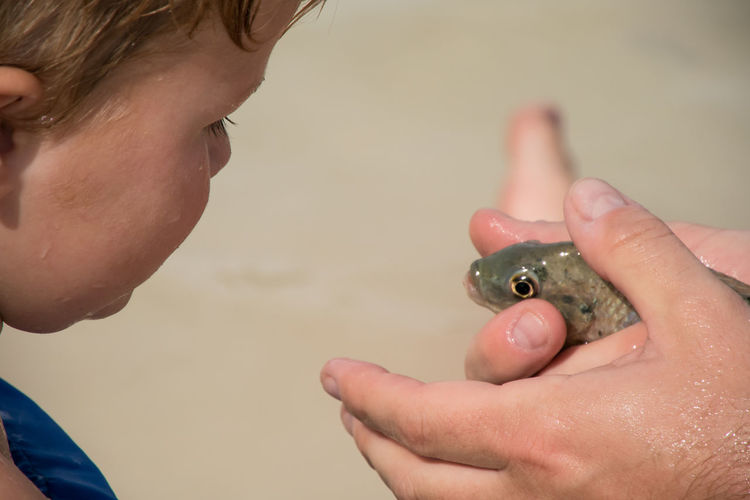 Adult Animal Child Childhood Close-up Day Father Teaching Son Fish Holding Human Body Part Human Hand Learning Little Boy One Person Outdoors People Responsibility Up Close And Personal Young Boy