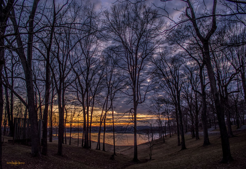 Barren River Lake, KY. U.S.A. Tree Beauty In Nature Nature Sky Tranquility Growth Bare Tree Sunset Scenics Idyllic Outdoors Tranquil Scene Lake Silhouette Water Kentucky  EyeEm Best Shots Eye4photography  Barrenriverlake Landscape_Collection Landscape Photography Sunset_collection Sunsets Sunset_captures Colorful