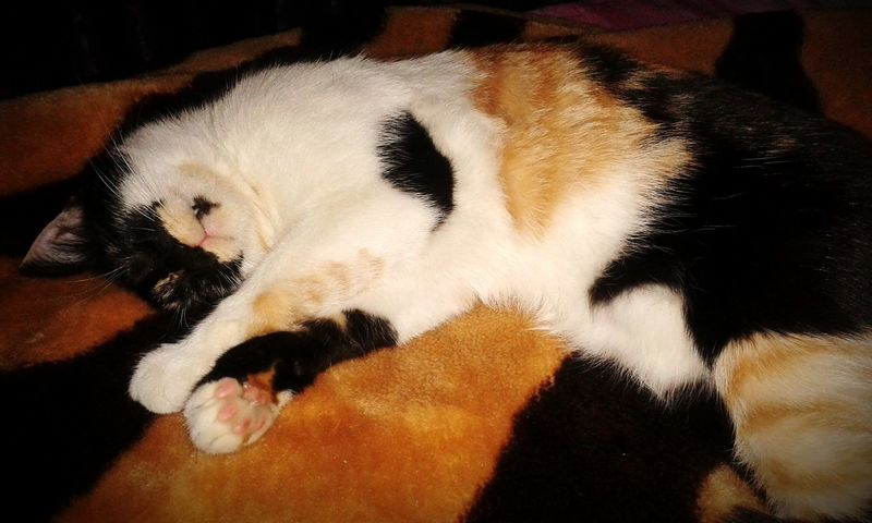My Adorable Kitty MyLittleCat 💕 🐱 Lovely Cat 😻 Sleepy Cat