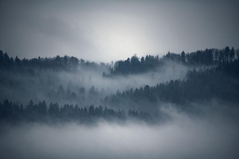 Fog Tree Tranquil Scene Scenics - Nature Forest Landscape Idyllic Hazy  WoodLand Bantiger Outdoors Environment Tree Hazy  WoodLand