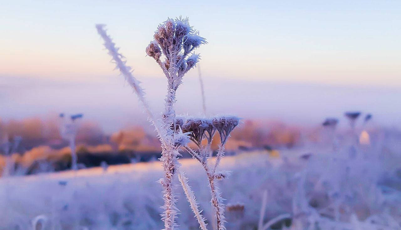 nature, focus on foreground, plant, beauty in nature, growth, outdoors, flower, tranquility, no people, close-up, fragility, day, winter, sunset, water, sky, freshness