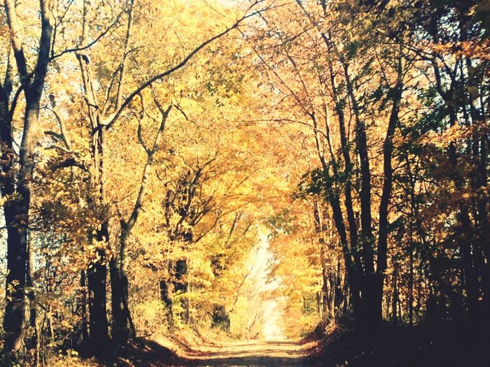 Autumn Country Road Falling Leaves Backroads