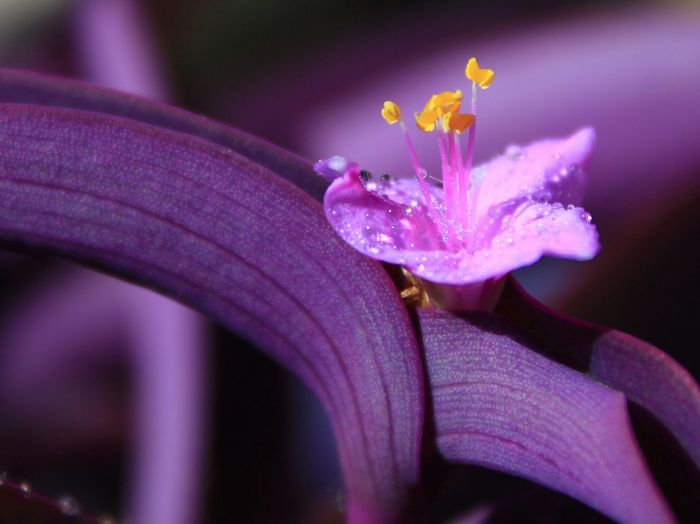 Nature Fragility Flower Maximum Closeness Purple Flower Yellow Yellow Flower Garden Macro Focus Object