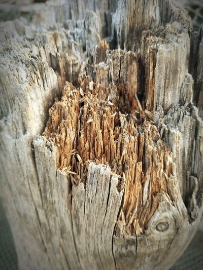 V5plus V5+ Vivosmartphone Textured  High Angle View Close-up Tree Stump Dead Tree Deforestation Dead Plant Firewood Log Tree Ring