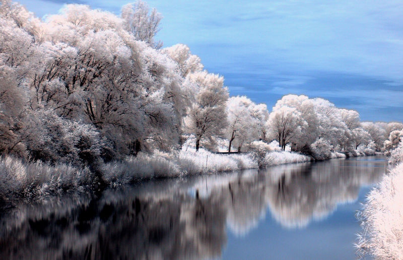 Reflection of snow covered trees in lake