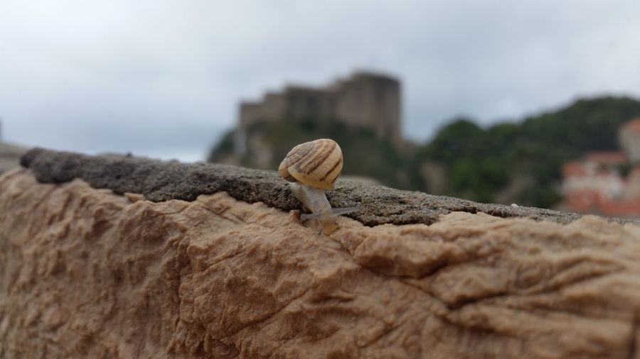 Animal Shell Animal Themes Animals In The Wild Brown Built Structure Close-up Day Eye4photography  EyeEm Focus On Foreground Log Nature No People One Animal Outdoors Perching Rock - Object Selective Focus Sky Snail Wildlife Wood - Material