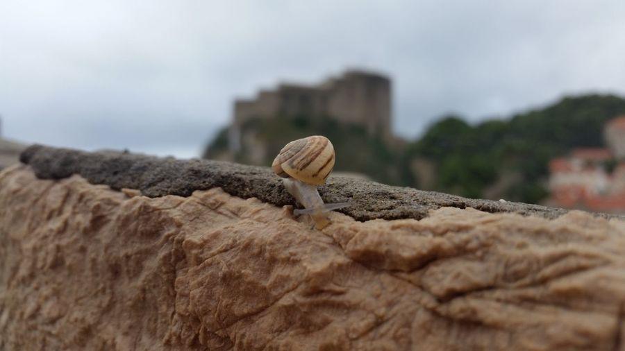 Snail on retaining wall