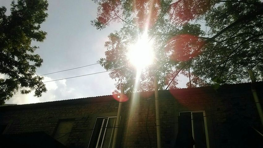 so...its winter. Sunlight Tree Sky Outdoors Beauty In Nature Sun No People Built Structure Sunbeam Low Angle View Sunlight No People Tree Sky Outdoors Sunset Nature Built Structure Sun Cloud - Sky Day Beauty In Nature Architecture