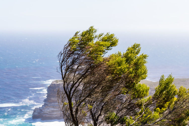 Windswept Tree Africa Beauty In Nature Cape Peninsula Coastal Landscape Day Horizon Over Water Landscape Nature No People Outdoors Scenics Sea Single Tree Sky South Africa Tree Windswept