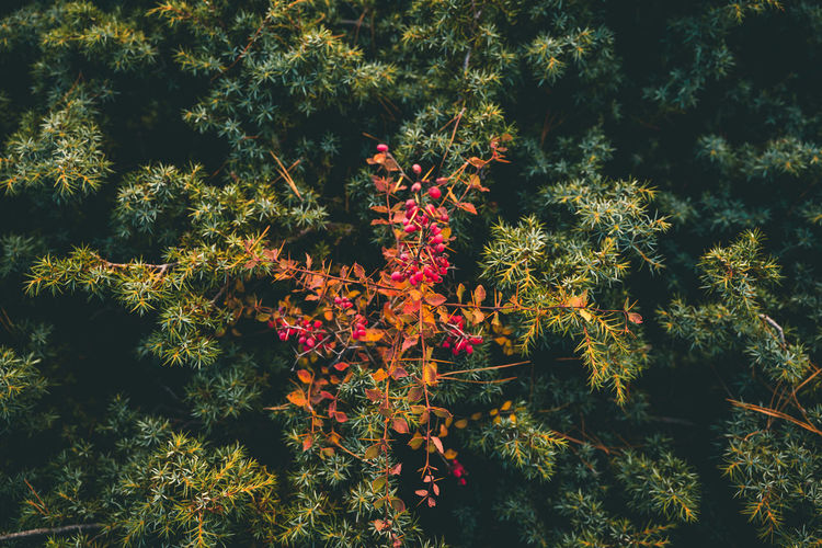 High angle view of flowering trees at night
