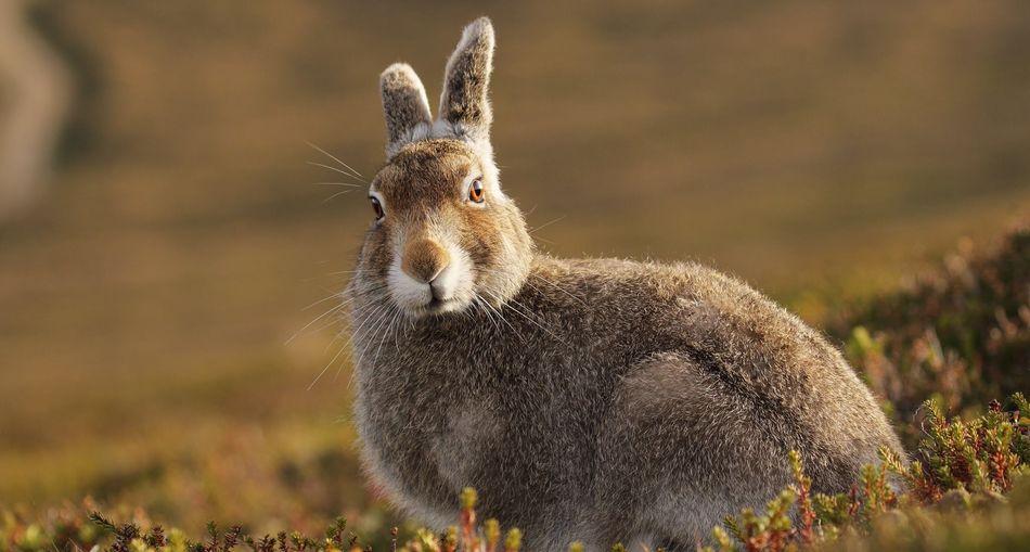 Portrait Of Rabbit Sitting In Field