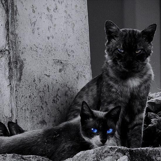 🐱 Pets Domestic Cat Cat Feline Family Cat Animal Themes