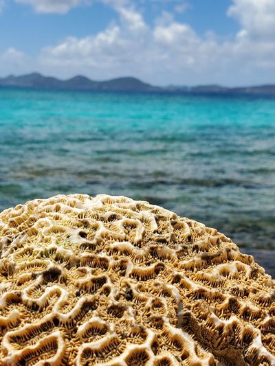 Close-up of  braincoral, sea shore against sky