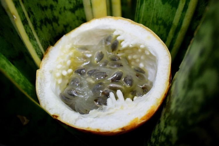 Close-up Nature Food And Drink No People Healthy Eating Food Marakuja Fruit