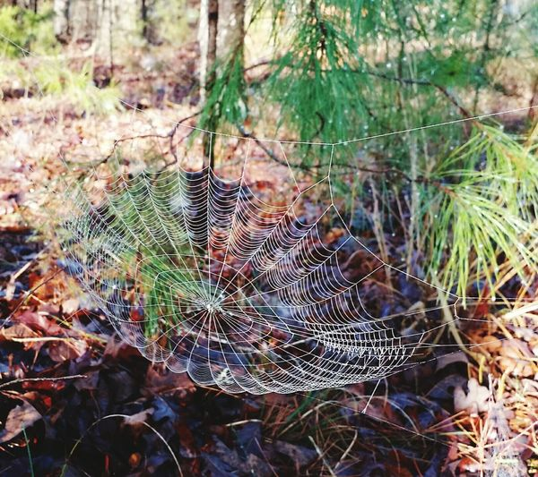 Spider Silk Spiderweb In Morning Dew Beauty In Nature Close-up Beautyineverything