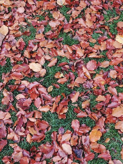 Leaves Grass Autumn Fall Colors Fall Leaves Red Pattern Backgrounds Close-up Abstract No People Outdoors Day