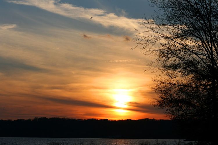 Sunset, Indiana Sunset Sky Beauty In Nature Scenics - Nature Tranquil Scene Silhouette Tranquility Cloud - Sky Tree Orange Color No People Idyllic Nature Plant Water Non-urban Scene Bare Tree Sun Outdoors Romantic Sky