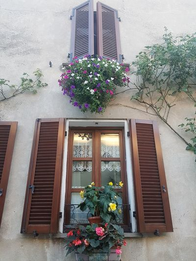 Flower Window Architecture Built Structure Day Indoors  Plant No People Growth Building Exterior Window Box Nature Freshness