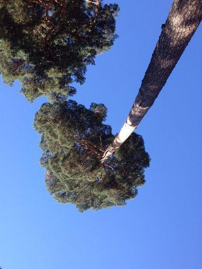 Mirando hacia arriba