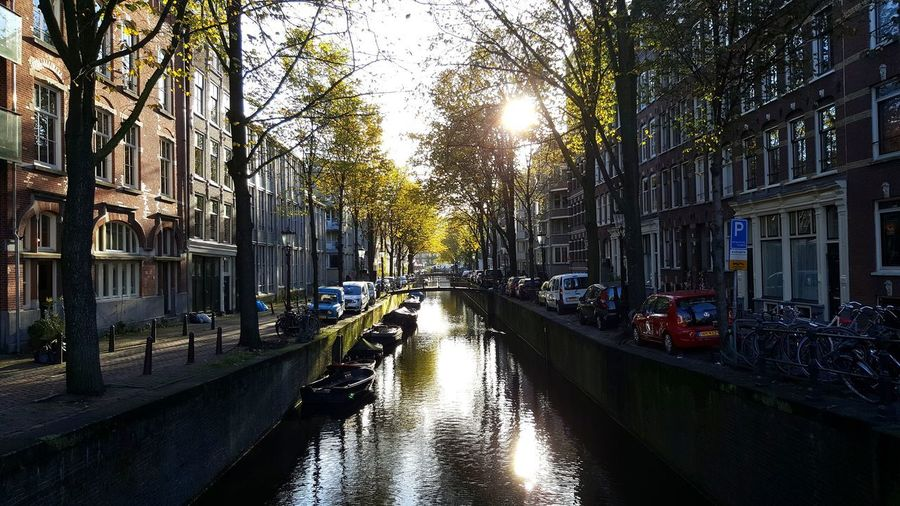 early morning walk... Amsterdam is still sleeping Amsterdam Amsterdam Canal Mokummagazine Netherlands Amsterdamcity EyeEm Nature Lover EyeEm Best Shots EyeEmNewHere Streetphotography Streetrain Canalcruise Architecture Built Structure Outdoors Building Exterior Day No People Tree City Water Sky