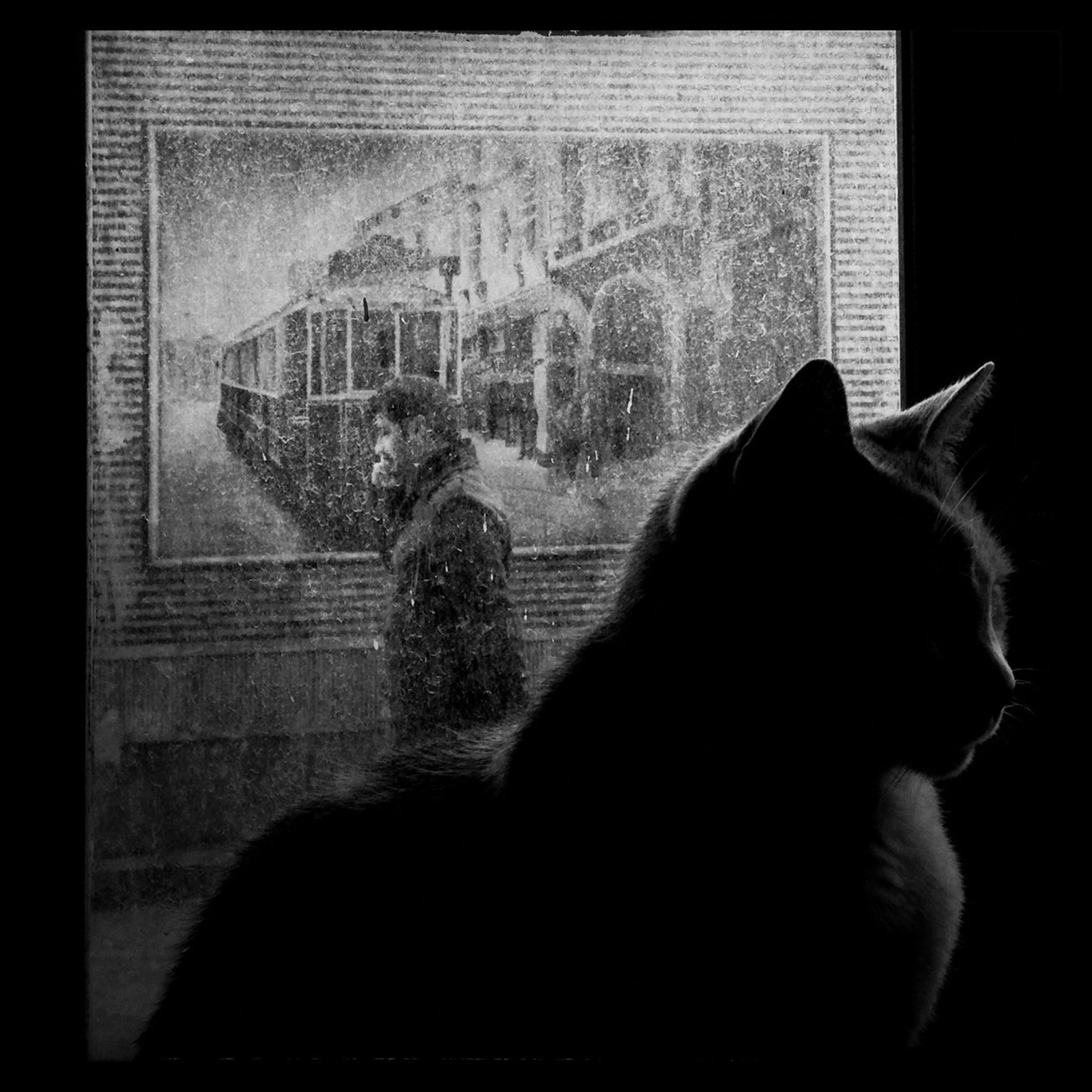 animal themes, domestic animals, indoors, pets, mammal, one animal, domestic cat, window, transfer print, cat, auto post production filter, glass - material, built structure, home interior, togetherness, architecture, relaxation, rear view, sitting