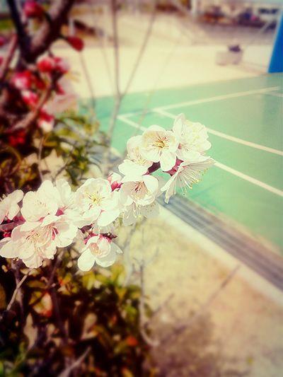 Ulsan No.6 Blossom