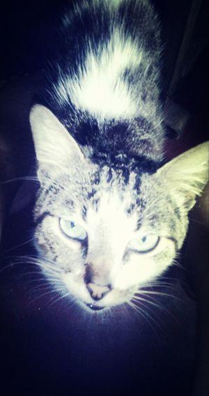 Gatitoo :3