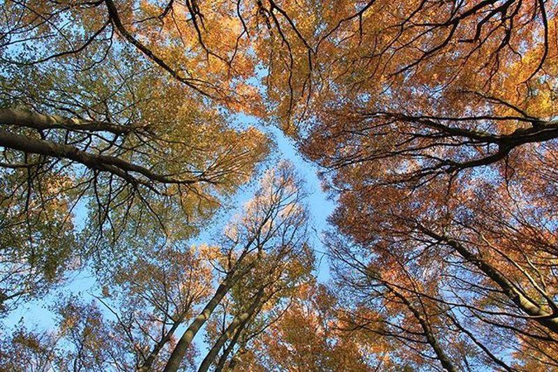 Alberi Trees Peme Pyll Bosco Cielo Sky Qiell Landscape
