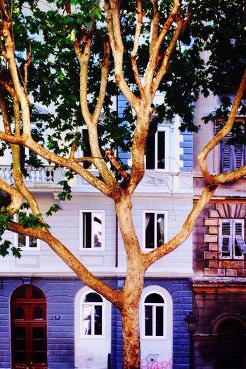 Streetphotography City Geometry The Architect - 2015 EyeEm Awards Urban Reflections Hugging A Tree