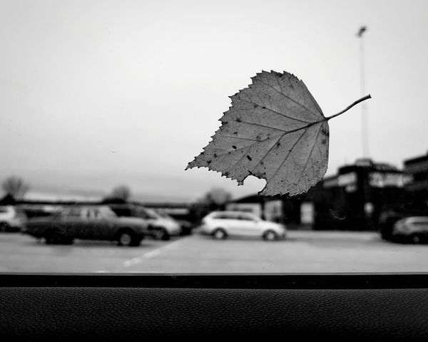 Autumn signs 😗🤧🙆‍♂️❤ Urban Leaf No People Parking Close-up B&w Photography Bw_lover B&w Silhouette Nature On Your Doorstep Nature Is Art Nature In The City