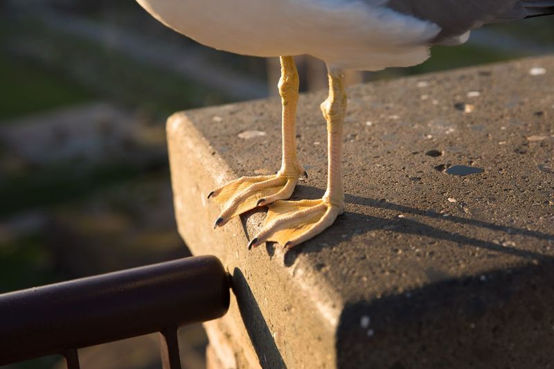Close-up of seagull perching on ground