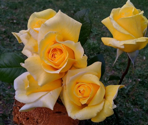 Close-up of yellow rose bouquet