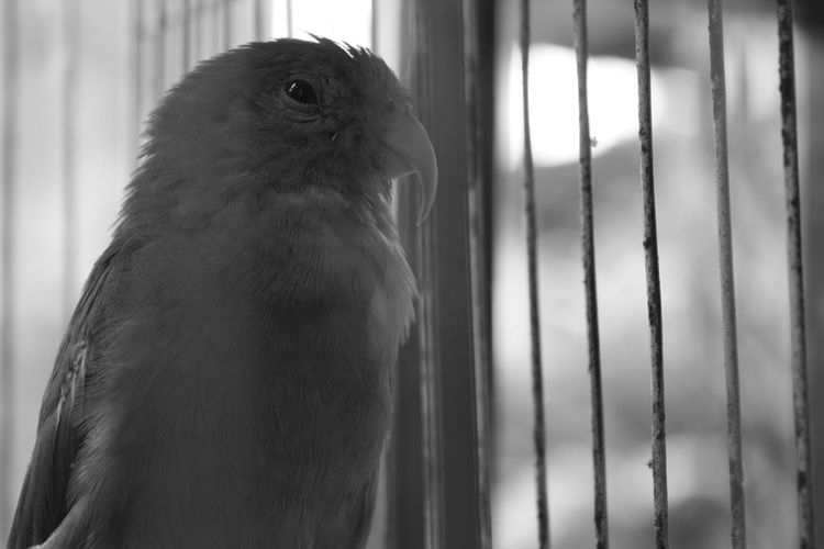 What Does Freedom Mean To You? SadnessFreedom Being Out Of Cage