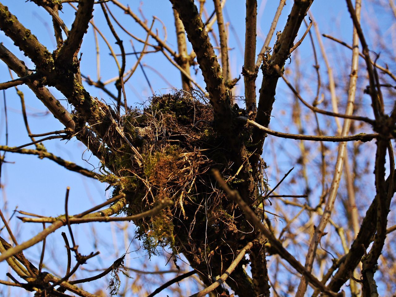 tree, plant, branch, low angle view, animal nest, nature, day, sky, bird nest, no people, focus on foreground, bird, outdoors, close-up, beauty in nature, bare tree, animal themes, twig, selective focus, animal, dead plant