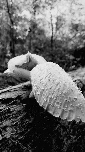Life finds a way Beauty In Nature Outdoors Focus On Foreground Tranquility Treebark Detailed Shadows & Lights Blurredbackground Curiousmoments Beauty In Nature WoodLand Forest Curiouscapture Nature Mushrooms In Nature Mushroom Photography Mushrooms Growing Wild Black & White Photography
