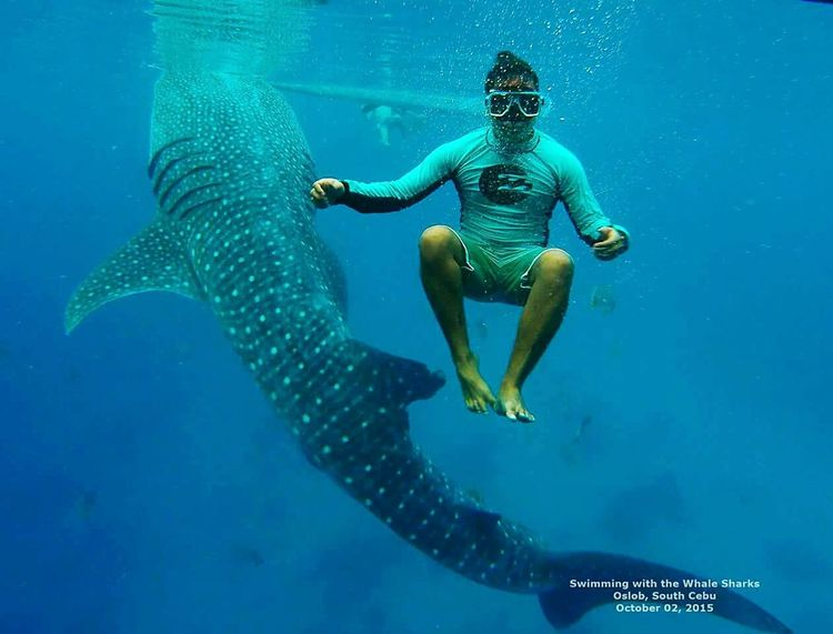this is a photo I took of my friend during our trip in Oslob Cebu Philippines he was being careful not to touch the Whaleshark 😊 DISCLAIMER: no whaleshark was harmed when we took this photo😀 Itsmorefuninthephilippines Whalesharkwatching Oslob Cebu Outdoor Photography Travel Photography Feel The Journey Swimming With The Whaleshark Adventure The Great Outdoors With Adobe The Great Outdoors - 2016 EyeEm Awards Nature Photography Fresh On Eyeem  Gopro Original Experiences Eyeem Philippines Adventure Club Colour Of Life People And Places
