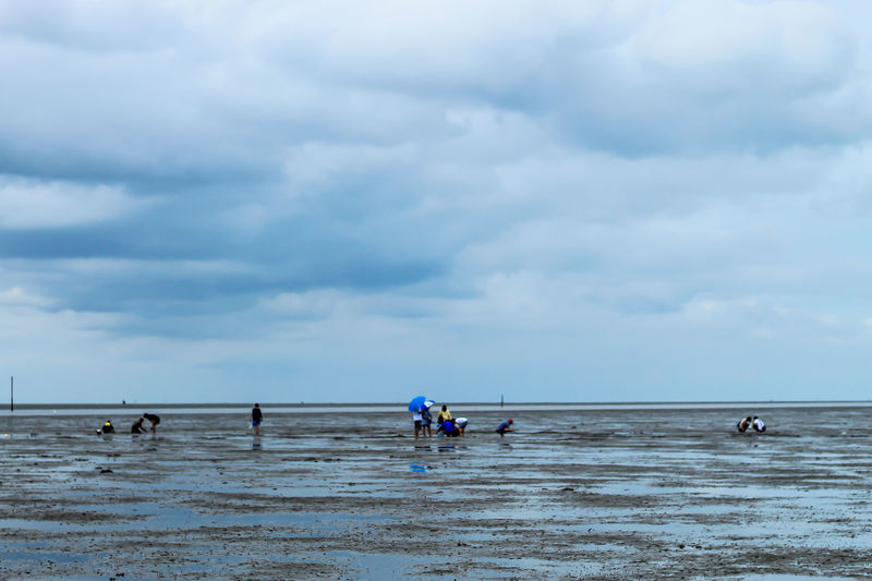 Tourists looking for Snail shells on the sea floor mud. Beach Beauty In Nature Cloud - Sky Day Group Of People Horizon Horizon Over Water Land Leisure Activity Lifestyles Men Nature Outdoors Real People Scenics - Nature Sea Sky Trip Water