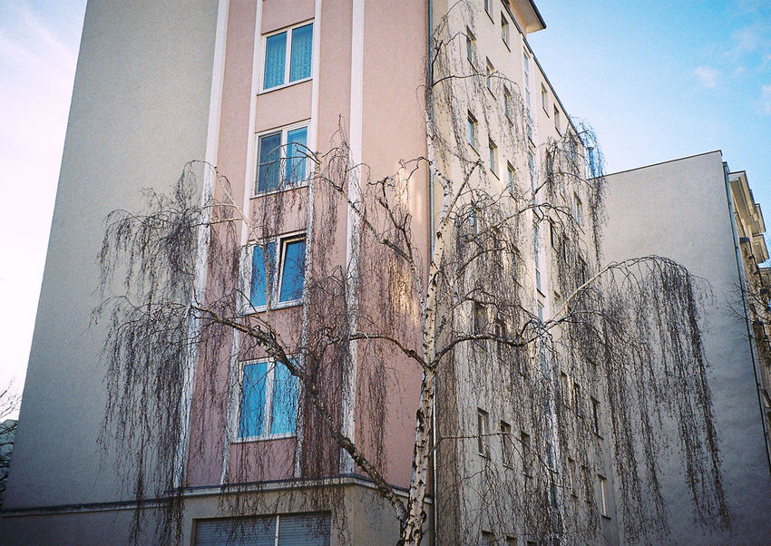 Rosa Houses And Windows Trees Winter 35mm Film Analogue Photography Filmisnotdead Daydreaming Pastel Power