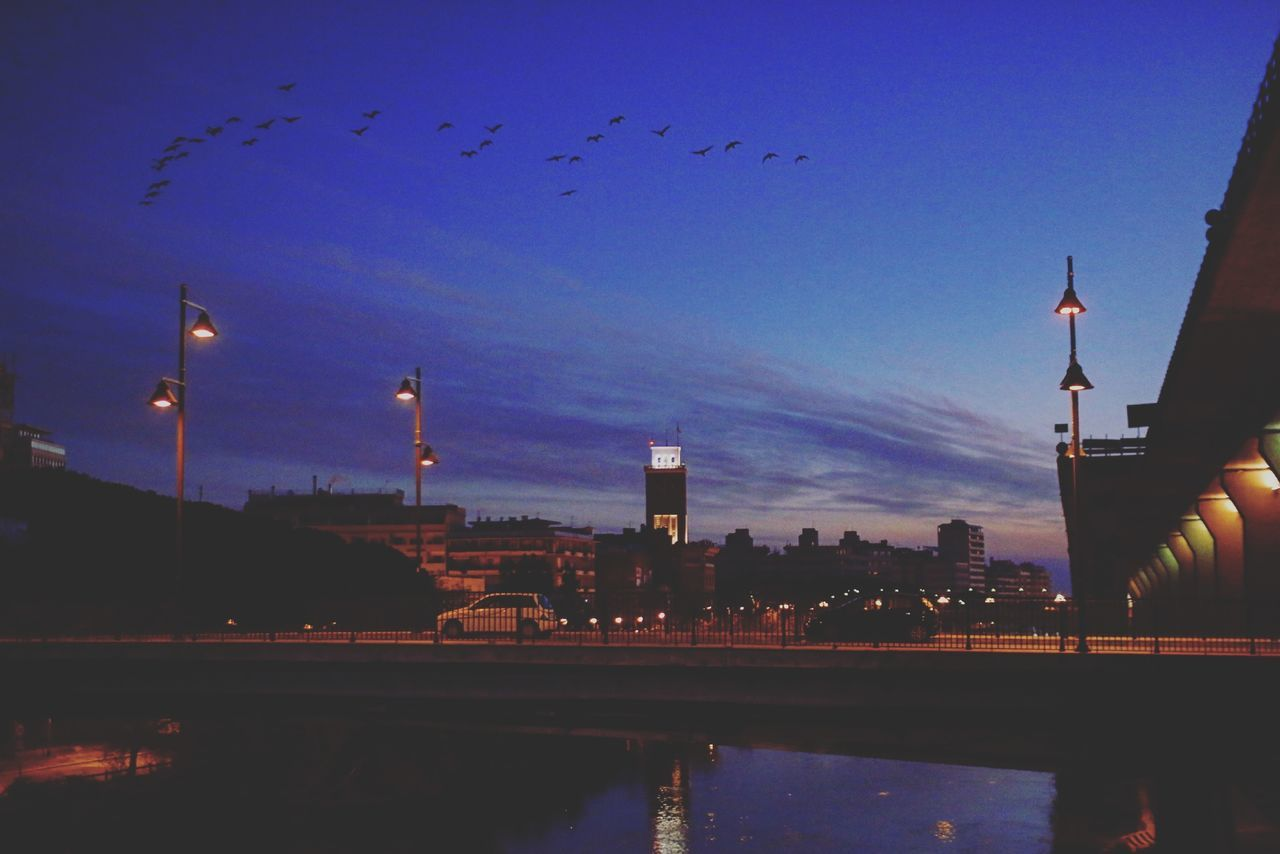 illuminated, water, sky, architecture, large group of animals, dusk, bird, built structure, silhouette, no people, building exterior, animal themes, flying, outdoors, animals in the wild, nature, night, city