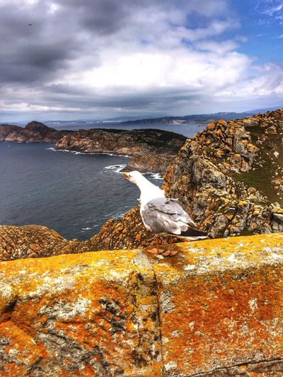 Nature Birds Clouds Sky Traveling Travel Discover The Beauty Of Nature Wildlife Islandlife Nature Galicia Seagull Sea Animal Wildlife Cloud - Sky Outdoors