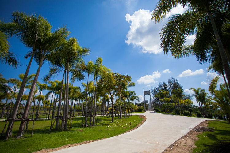 The sky is beautiful clouds At the public park of Thailand Tree Plant Sky Cloud - Sky Palm Tree Nature Tropical Climate Growth Green Color Footpath Day No People Beauty In Nature Grass Sunlight Outdoors Tranquility Sport Park - Man Made Space Park Coconut Palm Tree