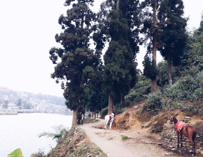 People riding trees on land