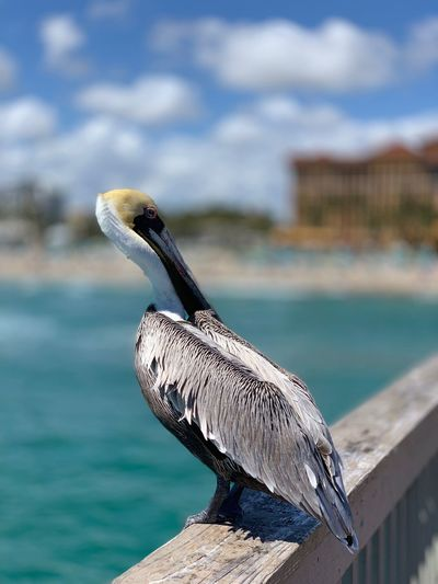 Close-up of bird perching on wood against sea