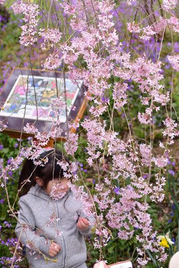 Little Girl Picking Flowers  Adorablekids Cherry Blossoms Family Holiday Japan Japan Photography Japanese Culture Sakura Day Kid