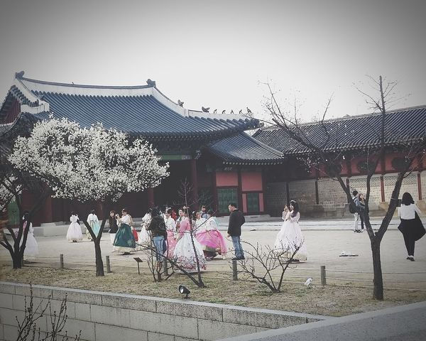 Gyeongbokgung Palace, Seoul 1392 -1897 Cherry Blossoms Seoul South Korea Seoul Spring Seoulspring2017